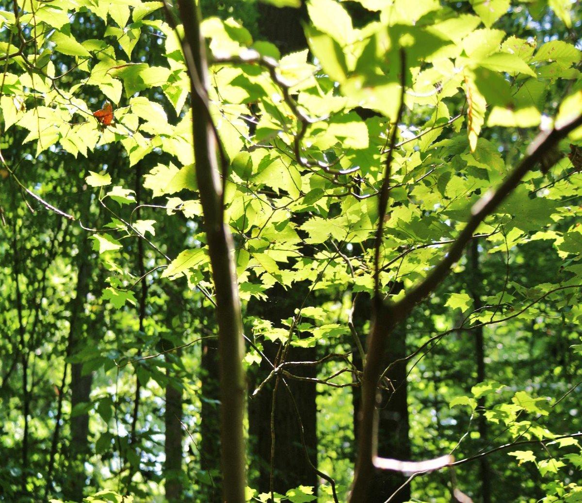 """Song of the Week: """"Green Leaves"""" by Raheem Devaughn"""